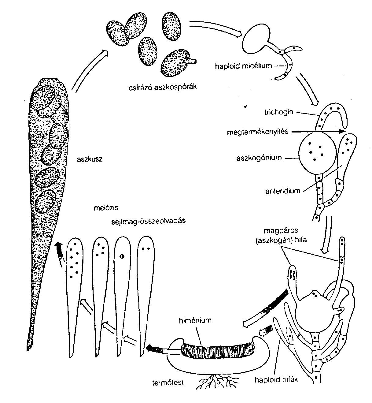 nagy paraziták az emberben pinworms vagy férgek